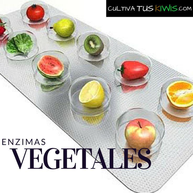 el-poder-de-las-enzimas-digestivas-naturales-del-kiwi-y-otras-frutas/ #kiwis #comprasonline #shoppingonline #fruta #nutricion #saludable