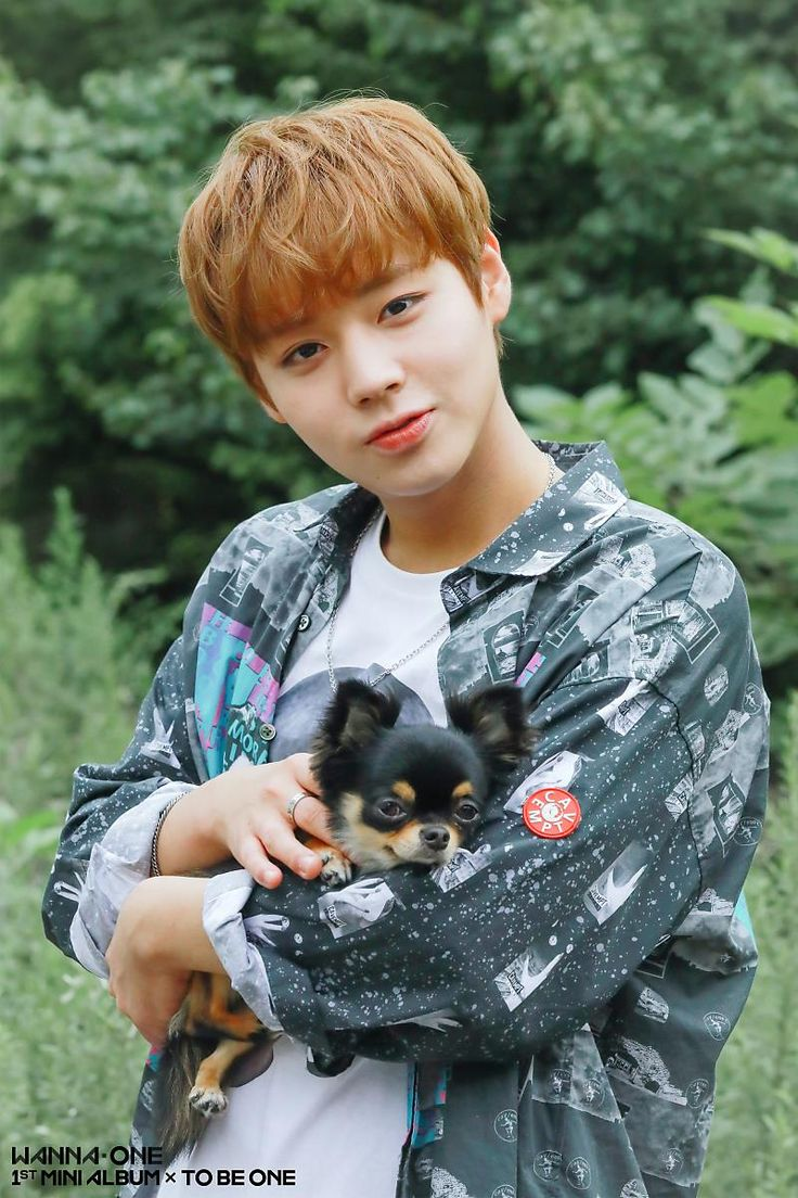 Park Jihoon (Wanna One)