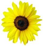Βιταμίνη Ε – Vitamin E 5ml, Η βιταμίνη Ε είναι ένα 100% φυσικό  αντιοξειδωτικό από ηλιέλαιο απαραίτητο για τη συντήρηση των φυτικών ελαίων (να μην ταγγίζουν) και των βουτύρων.    Έχει επίσης αντιγηραντικές ιδιότητες και συνιστάται ιδιαίτερα για τις ξηρές και ώριμες επιδερμίδες όπως και για την περιποίηση του δέρματος μετά τον ήλιο.