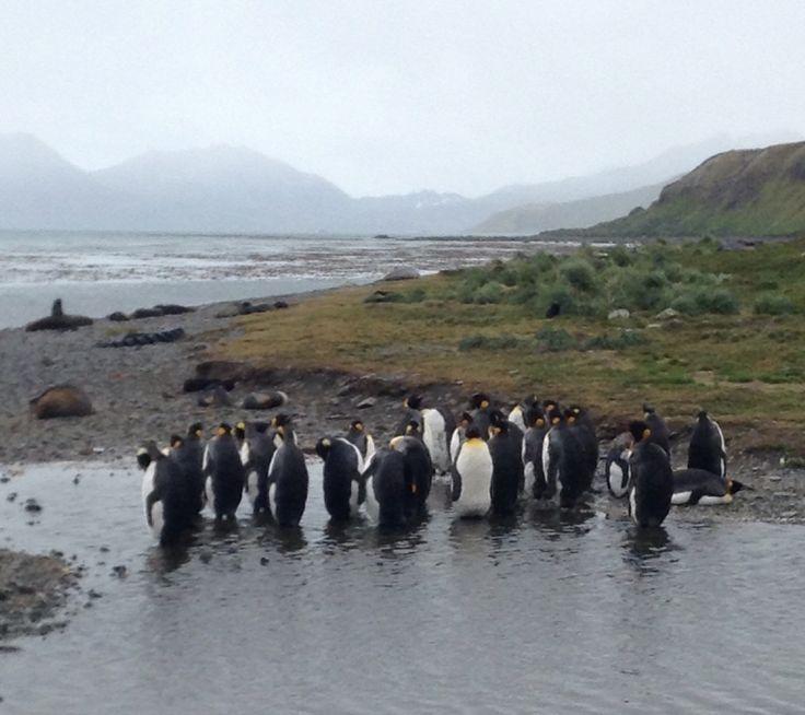 #South Georgia Antartica