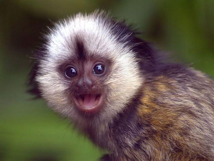 achtergronden voor je desktop - Apen: http://wallpapic.nl/dieren/apen/wallpaper-30124