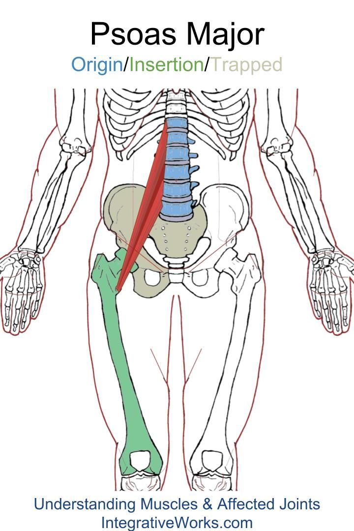 Psoas Major – Functional Anatomy | anatomy | Pinterest