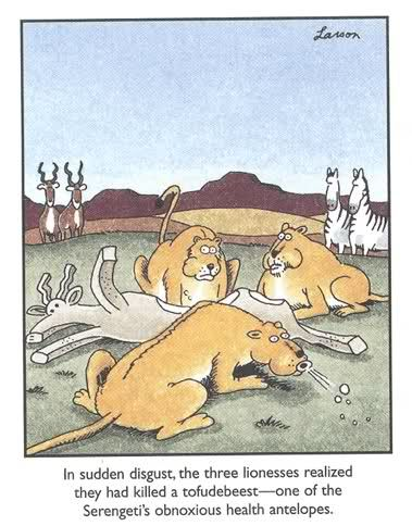 The Far Side by Gary Larson. These lionesses knew not to eat conventional soy, evidently.