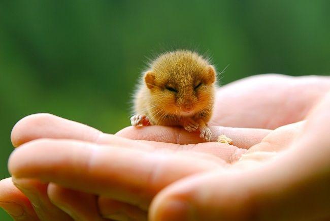 Is it a mouse? Is it a chicken? Whatever it is — it's cute as hell.