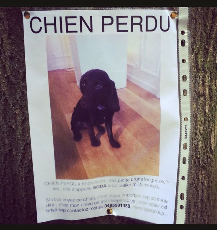 14 best Lost Posters images on Pinterest Lost pets, Poster and - lost pet poster