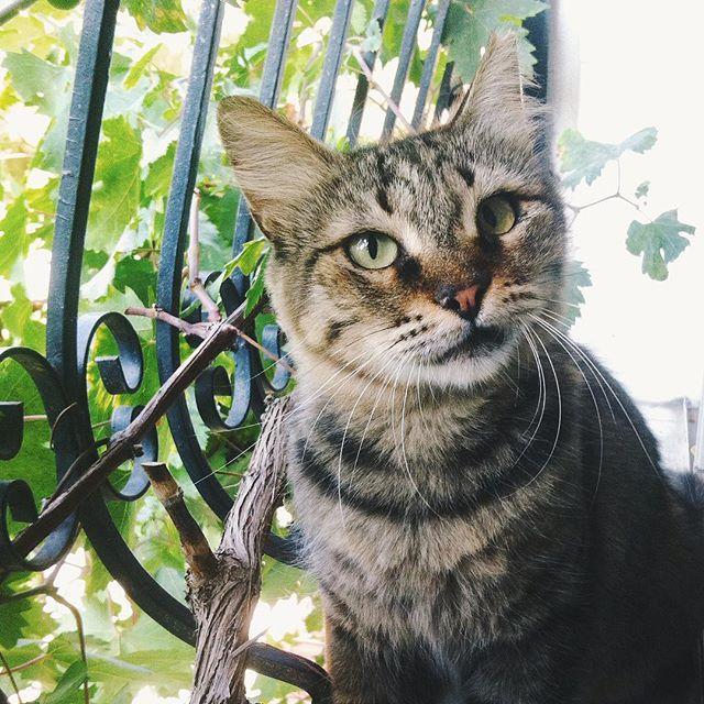 Ne vercen bana ?  #vsco #vscocam #cat #kedi #animal #feed #food #izmir #summer #water #iphoneonly #followme