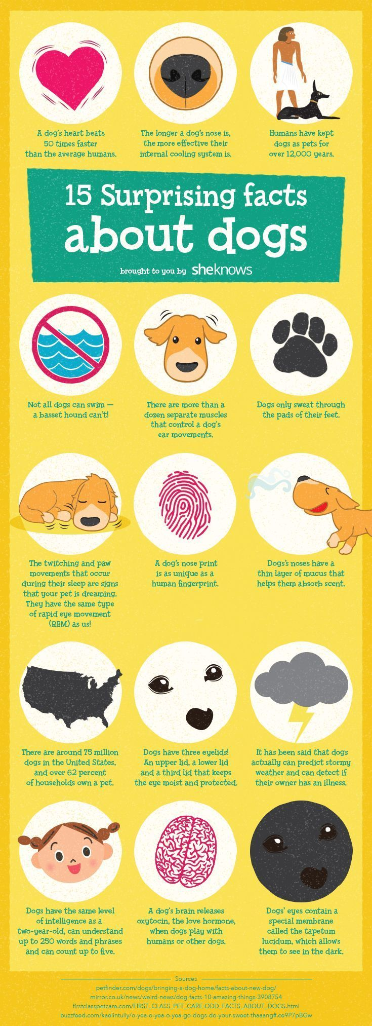 Amazing dog facts that will make you love your pup even more Do you know how man…