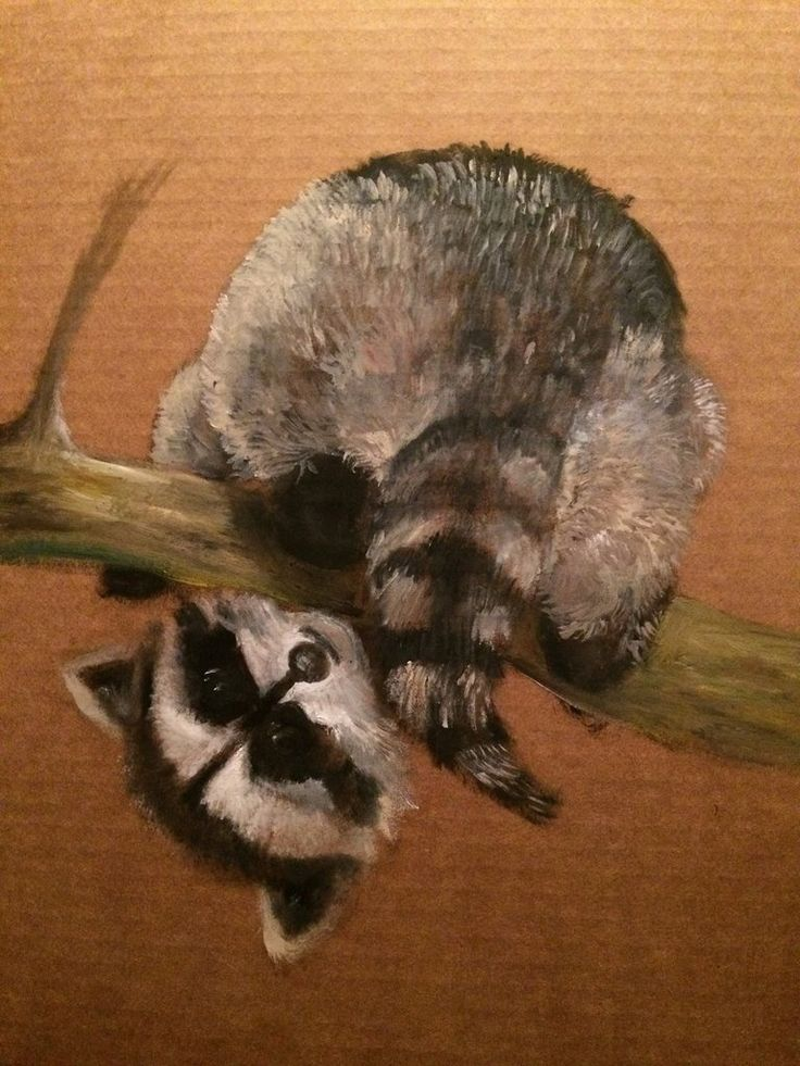 What doing, baby Racoon(Original Painting)