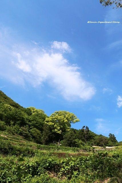 のどかな景色広がる中山千枚田。中山千枚田の観光スポット。