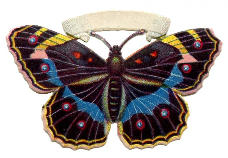 Vintage Butterfly Image - Spotted - The Graphics Fairy