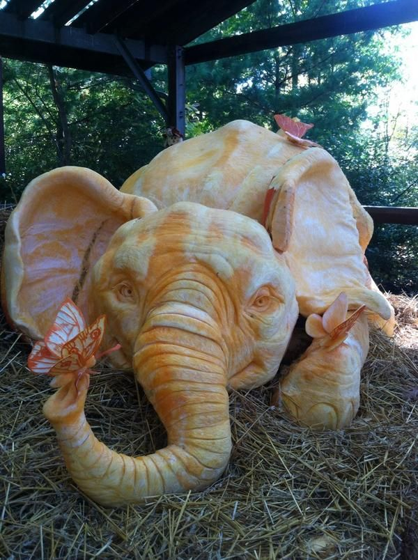 60 best creations images on pinterest red hen hens and for How to carve an elephant on a pumpkin