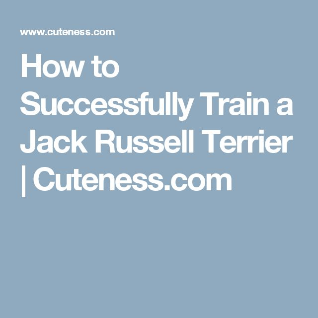 How to Successfully Train a Jack Russell Terrier | Cuteness.com