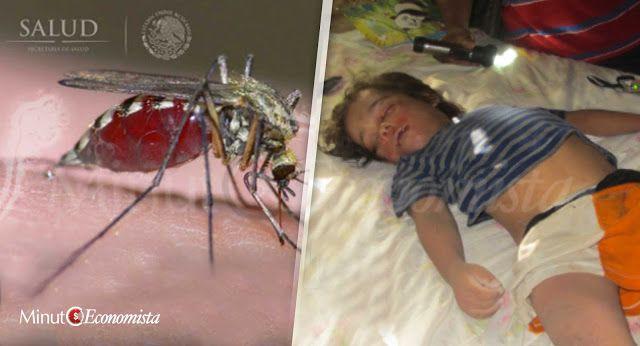 Nuevo virus transmitido por mosquitos está matando miles de niños