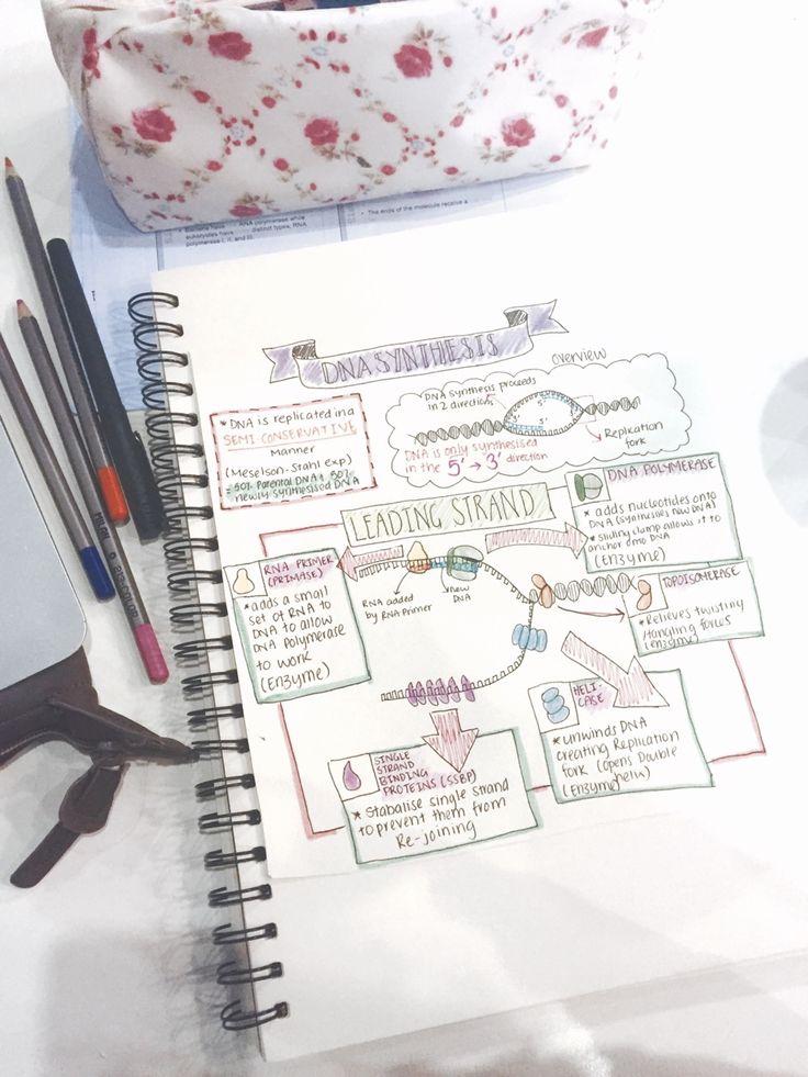 In Deep Focus • the-etranger:   Biology diagrams in preparation...