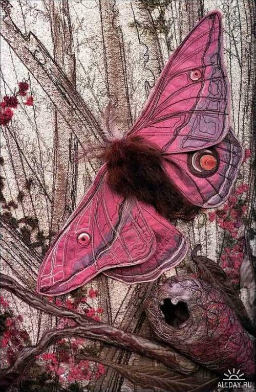 Looks like I will be making new Puppets for Explorations Pink Emperor Gum Moth