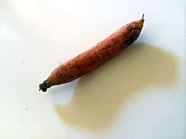 #food #carrot  Not very fresh veggy .. Almost all the pictures we find around , in fact , represent the beauty and freshness of food. It is like photographing only young people and forgetting of the #old...  #Vegetagles