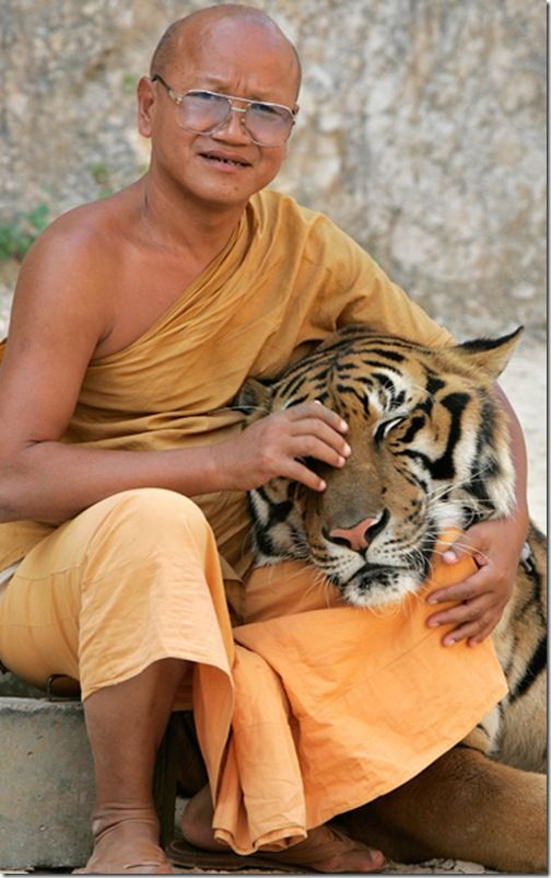 Thailand Tiger Sanctuary Hugging a tiger - on the bucket list