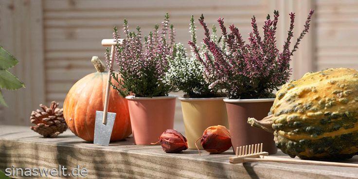 Herbstbepflanzung für den Garten und Balkon, Kübelbepflanzung ...