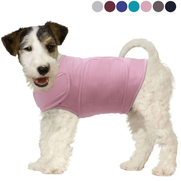 1695 best cat health images on pinterest kitty cats cat for Medical pet shirt dog