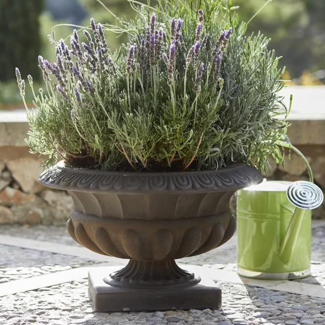 Pin Oleh Tar Shop Di Vase Amphore Blumenvase Deko Vasen Terrakotta