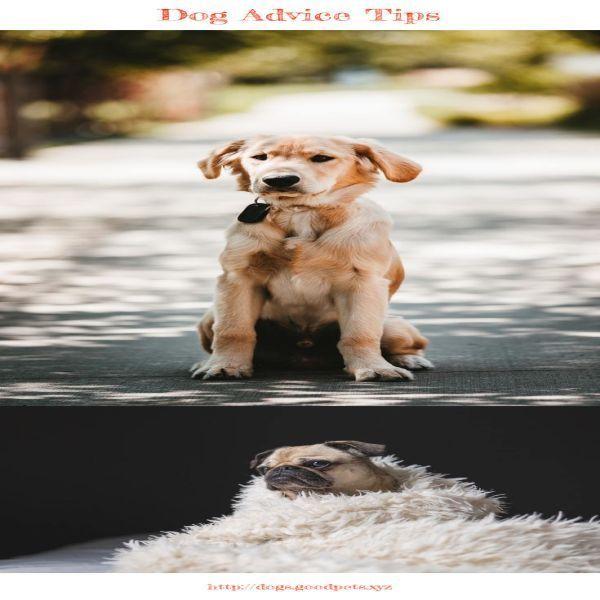 Hundetrainingstipps Auf Tamilisch Mit Bildern Hundchen Training Hunde Training