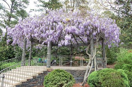 Set limits for vines like wisteria...they grow very quickly