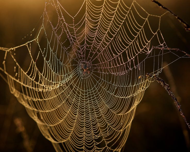 nature chandeliers Photograph Spider Web by Erik Veldkamp on 500px