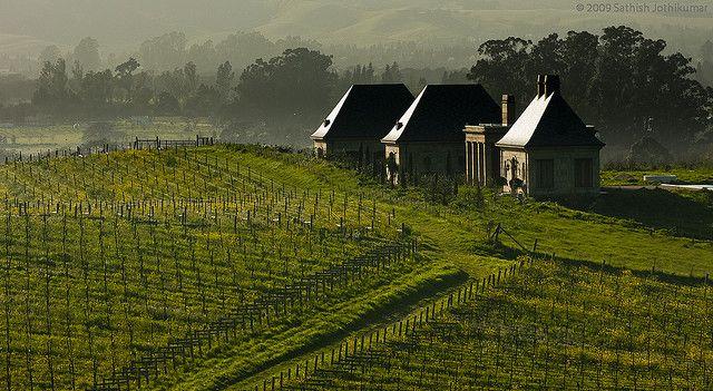 Винная долина Напа, что находится в Калифорнии, всего в часе езды от Сан Франциско. Кроме виноградный полей здесь проводят еще и дегустацию