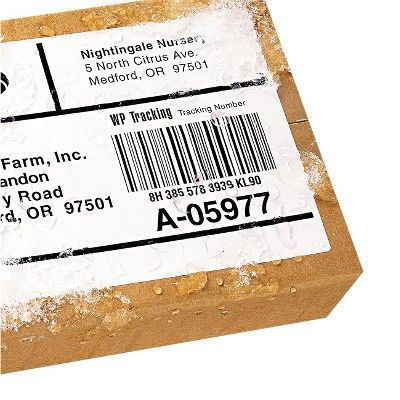 Avery 5-1/2 x 8-1/2 Laser Weatherproof Shipping Labels - White (100 Per Pack)