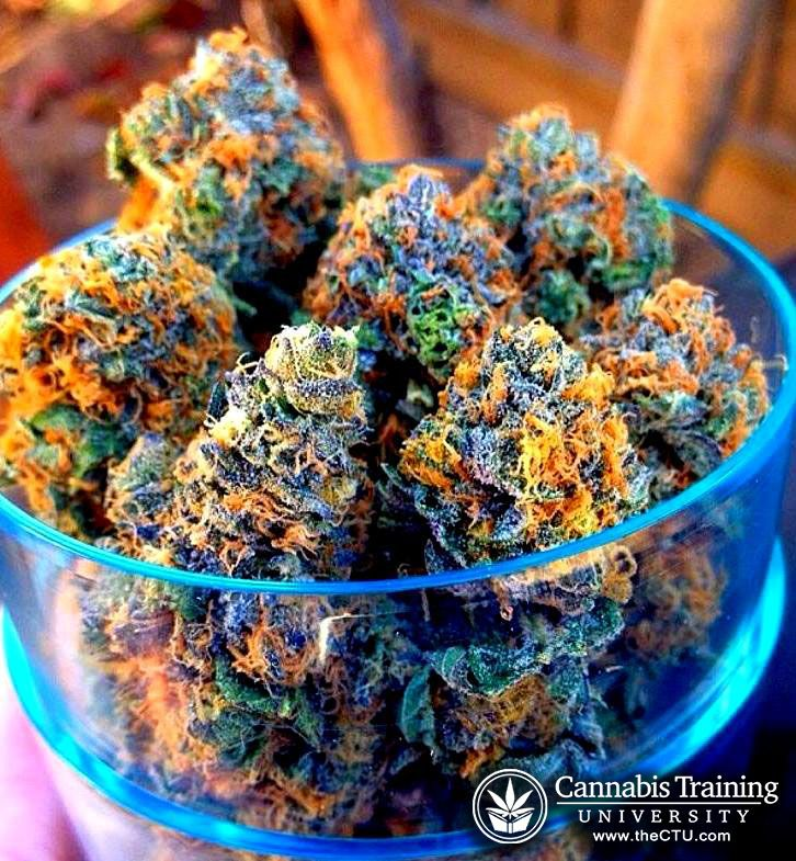 Medical marijuana, quality buds! | cannabistraininguniversity.com