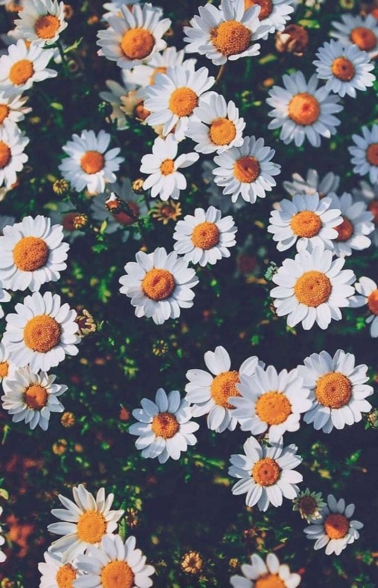Image result for Yellow and White Daisies pinterest