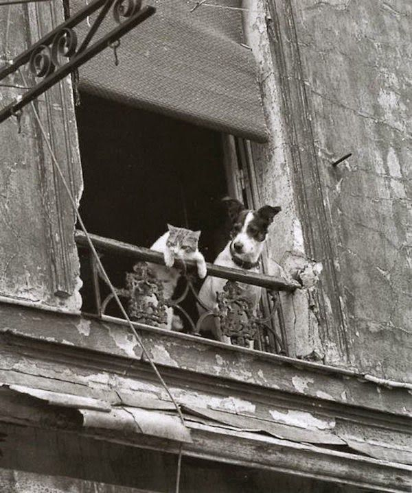 Old black and white photo by Annick Gerardin of a cat and a dog observing their neighborhood from their window. Click here to see the photo series: http://www.traveling-cats.com/2015/06/cats-from-paris-france.html (old picture, black and white picture, Paris, France, French, cat and dog, window cat, window dog, cat and dog friends, Annick Gerardin)