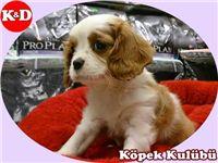 SÜS KÖPEKLERİ 05323438041 http://www.kopekdunyasi.club/sayfa-kategori/175/sus-kopekleri