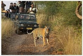 Ranthambore National park, one of the largest forests in India is gaining attention by the photographers and wildlife lovers across the world. Earlier, before independence, Ranthambore was hunting ground of many Rajput kings who use to have hunting as their one of the great interests.
