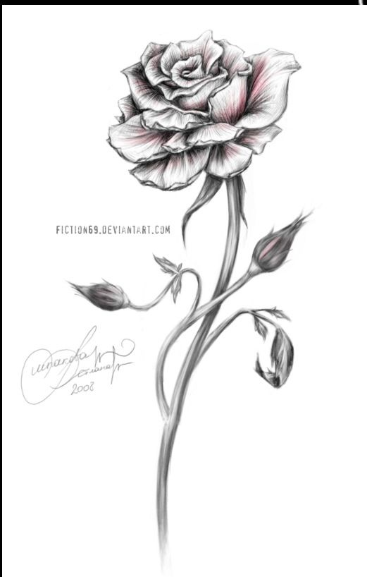 Rose With Thorns Drawing