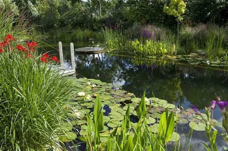 1000 Images About Natural Swimming Ponds On Pinterest Gardens A Natural And Natural Swimming