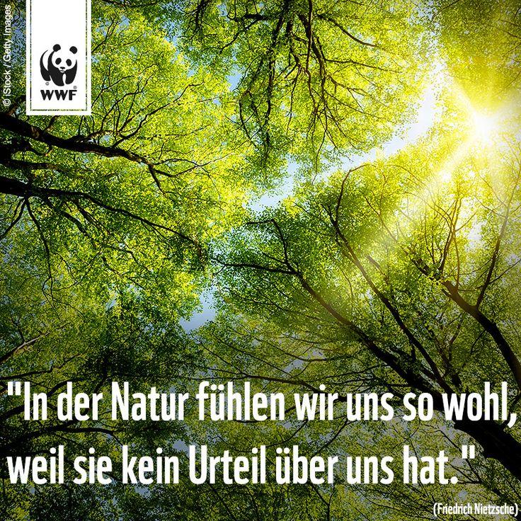 """Zitat zum Sonntag: """"In der Natur fühlen wir uns so wohl, weil sie kein Urteil über uns hat.""""  (Friedrich Nietzsche)"""