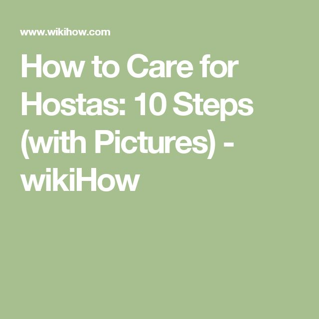 How to Care for Hostas: 10 Steps (with Pictures) - wikiHow