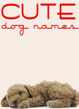 Cute dog names, at Puppy Names HQ, a great site to find dog names.