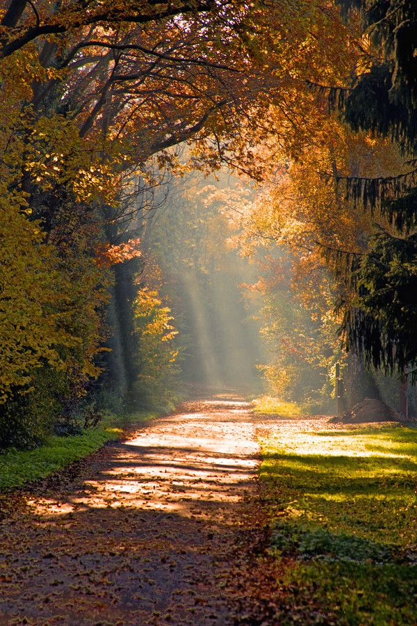 Autumn Delight by Andrea Fettweis on 500px