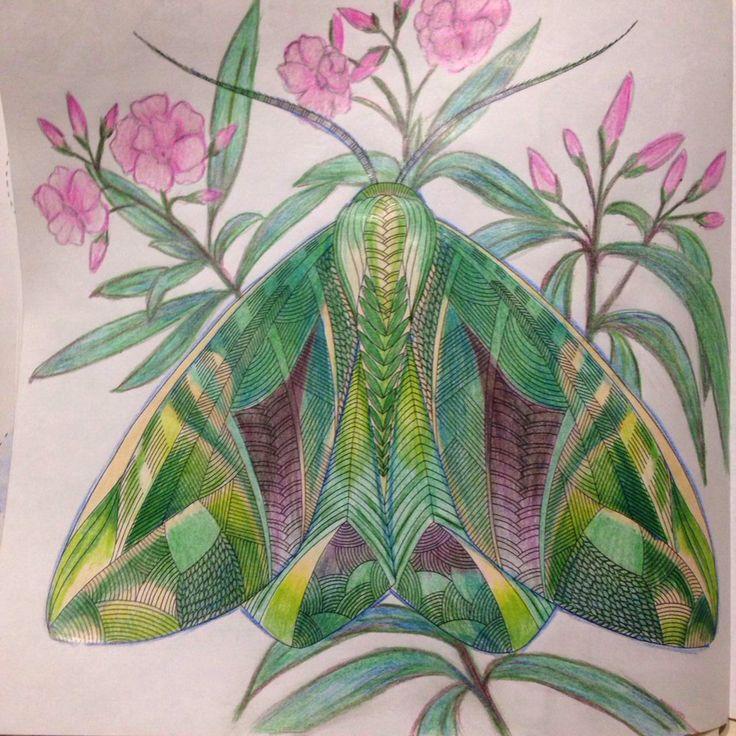 #animal_kingdom #butterfly# Millie Marotta