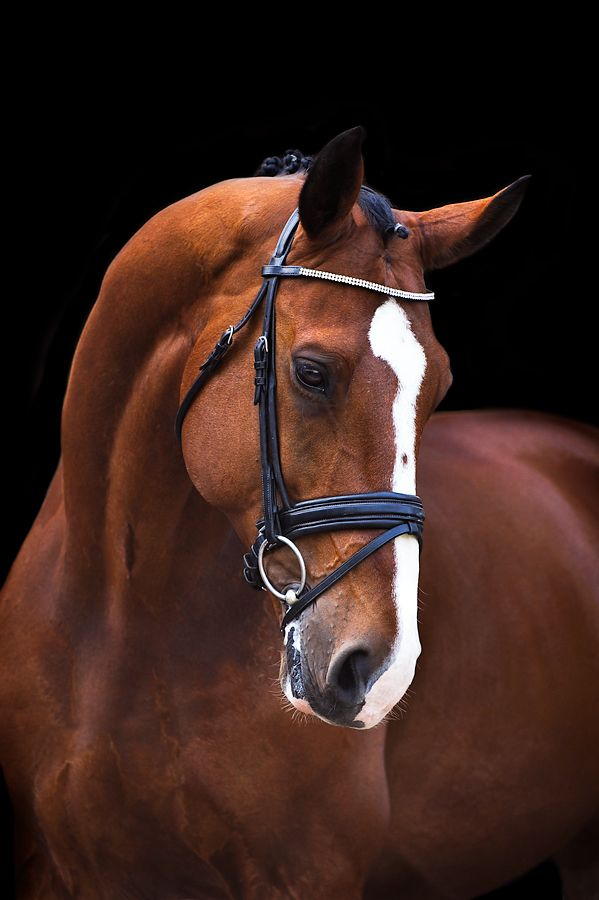 Gorgeous horse striking an expressive pose