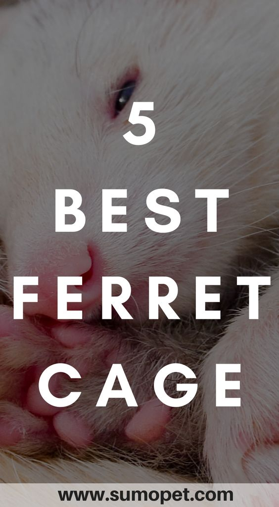 Having trouble choosing a cage for your ferret? I reviewed the 5 best ferret cages. no.2 is our pick