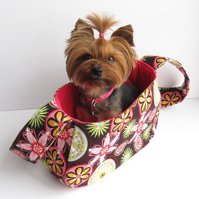 Love this haircut for a yorkie