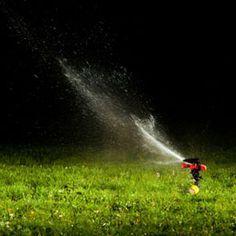 Homemade Lawn Fertilizers