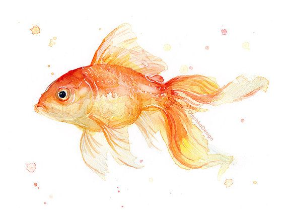 37 best watercolor animals images on pinterest for How to paint a fish