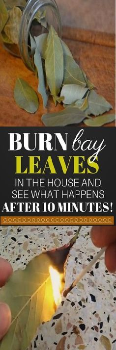 Modern society and l Modern society and lifestyle are constantly burdened by stress and tension. Relax. You deserve it its good for you and it takes less time than you think. You dont need a spa weekend or a retreat. All you need is one herb! Bay leaf! http://ift.tt/2ijNwFF