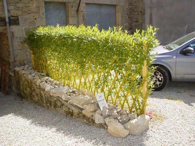 17 meilleures id es propos de arbuste haie sur pinterest - Quand planter des arbustes de haies ...