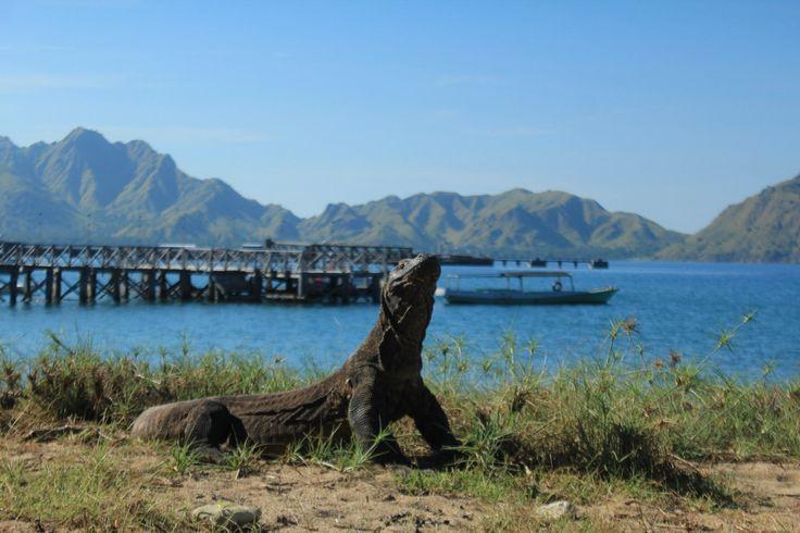 Sailing Komodo, Lombok To Labuan Bajo