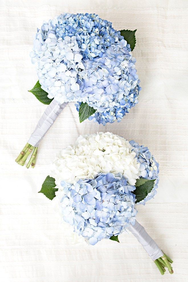 Everything You Need To Know About Using Hydrangea Flowers In Your Wedding Blue Wedding Bouquet Wedding Flower Guide Hydrangea Bouquet Wedding